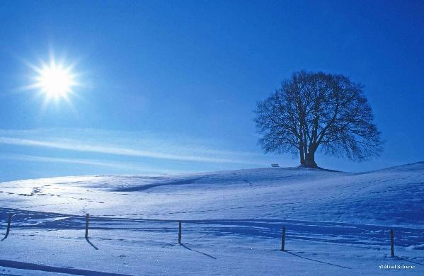 Er kommt bestimmt noch - der Winter. Bild © Alfred Schiener