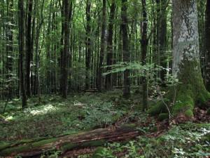 Naturschutzgebiete sind rechtsverbindlich festgesetzte Gebiete, in denen Pflanzen, Tiere und deren Lebensräume einen besonderen Schutz genießen.
