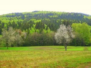 Wälder sichern Biodiversität und Erholung